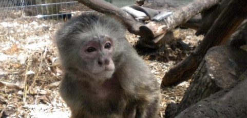 What I Learned from a Monkey and a Bunch of Customers